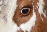 Czyje to oczy, rogi, grzebień, pióra a może sierść? Spróbujcie rozpoznać po fragmentach zdjęć!