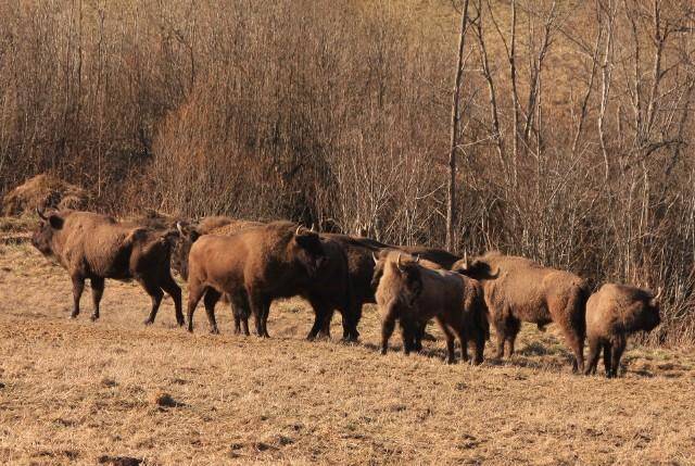 Zbyt liczne stada to duże zagrożenie transmisją chorób