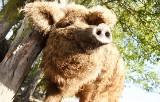 Hodowlane zwierzęta na lubuskiej wsi. Można spotkać rzadkie rasy świń, krów, kóz, domowego ptactwa