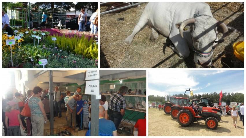 Sprawdź plan imprez rolniczych na Pomorzu w 2016 roku