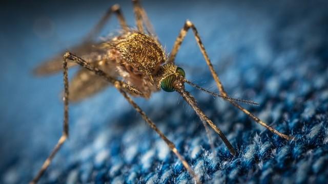 W Kostrzynie nad Odrą odbędą się opryski przeciw komarom.