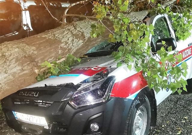 Potężny konar topoli runął 23 września na samochód Nadgoplańskiego WOPR. Półtoraroczne Isuzu nadaje się do kasacji
