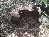 Przy cmenatrzu patyzanckim w powiecie skarżyskim grzybiarz znalazł kankę z nabojami