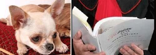 Właścicielowi zwierzęcia zostanie postawiony zarzut znęcania się nad psem