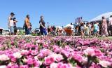 Drugi dzień Krajowych Dni Pola w Minikowie i targów. Zobaczcie zdjęcia!