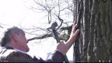 Na znak protestu przeciwko wycince drzew w Gnieźnie przybił swoją dłoń gwoździem do drzewa