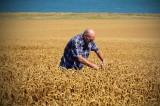 Nowe przepisy o grupach producentów rolnych. Projekt ustawy przyjęty