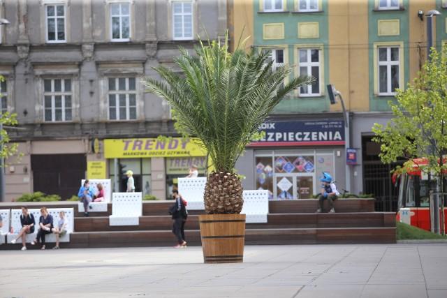 Do Chorzowa wrócił Bercik. Na razie z Galerii Libero w Katowicach przywieziono jedną palmę. Zobacz kolejne zdjęcia. Przesuwaj zdjęcia w prawo - naciśnij strzałkę lub przycisk NASTĘPNE