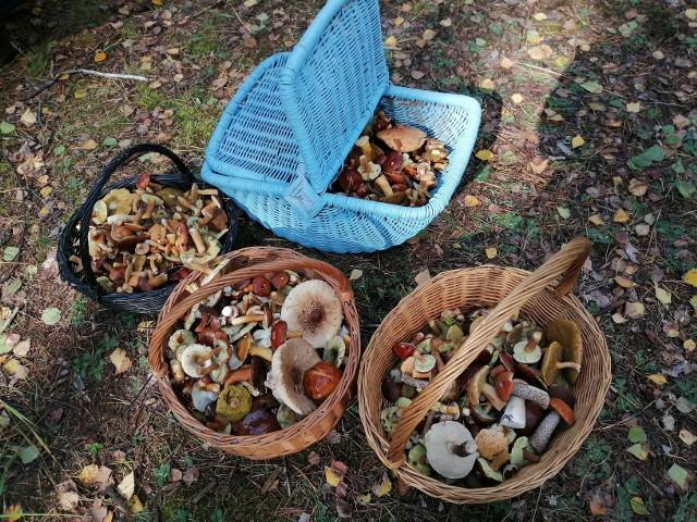 Kurki, prawdziwki, zajączki, krawce, maślaki - w lasach województwa łódzkiego trwa letni wysyp grzybów. Jest ich znacznie więcej niż przed rokiem, a specjaliści prognozują udany sezon jesienny, pod warunkiem, że nagle nie zaczną się upały.CZYTAJ DALEJ NA NASTĘPNYM SLAJDZIE