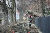 Powalone drzewo na ul. Pilczyckiej. Uwaga na utrudnienia w ruchu
