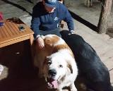 Pies zginął w męczarniach w salonie urody w Pyskowicach. Tosia spadła ze stołu i się udusiła. Właściciele są zrozpaczeni