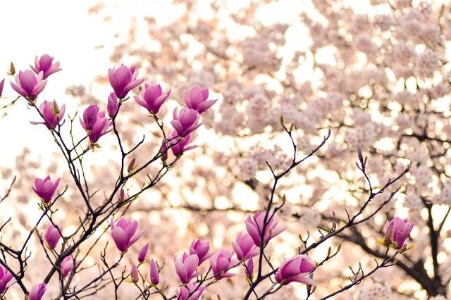 Meteorolodzy przygotowali już długoterminową prognozę pogody na wiosnę 2021 w Polsce. Zobaczcie czy aura szykuje nam miłą niespodziankę!