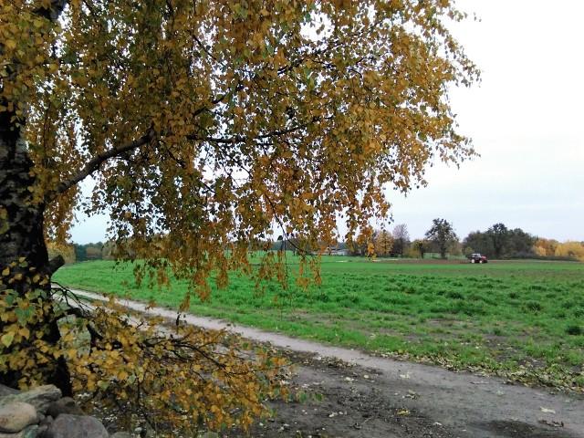 W 2020 roku 3738 rolników w Polsce zostało wytypowanych do kontroli przez ARiMR