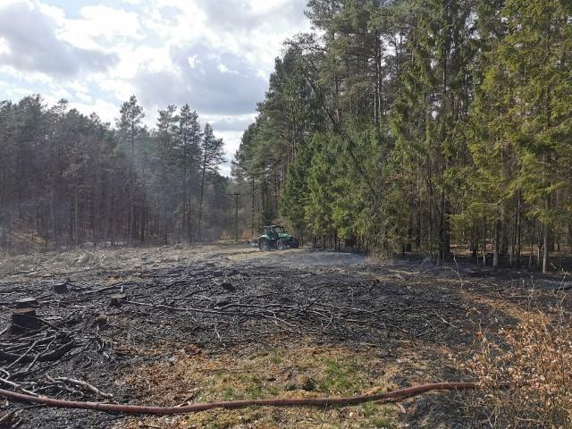 Pożar poszycia leśnego w Kołaczu