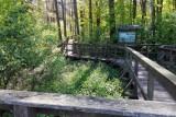 Masz ochotę na spacer w lesie, ale nie wiesz, gdzie się wybrać? Podpowiadamy