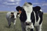 """Z Certyfikatem """"Bez GMO"""" łatwiej o zaufanie konsumentów"""