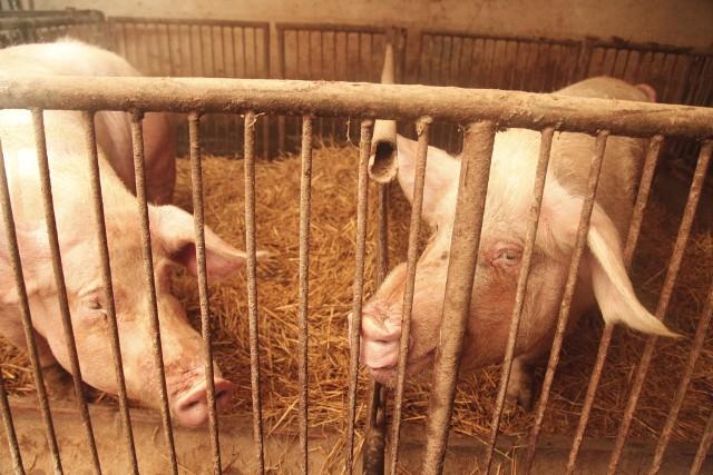 Komunikat dla posiadaczy bydła, owiec, kóz, świń