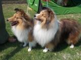 Stadion przy ul. Olimpijskiej pełen psich piękności (zdjęcia)