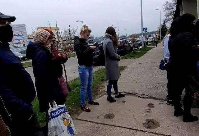 """Fundacja """"Aktywni Obecni"""" z Golubia-Dobrzynia przeprowadziła akcję rozdawania niemal 300 sadzonek drzew"""