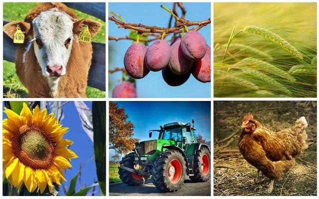Wraz z 1 stycznia 2019 roku w życie wchodzi kilka przepisów, o których warto, by wiedzieli rolnicy. Te nowości to m.in. ustawa, która podnosi limit paliwa do hektara, do jakiego będzie można dostać zwrot podatku akcyzowego. Dodatkowe 30 litrów limitu dostaną hodowcy bydła. Kolejna z ustaw zaczynających obowiązywać właśnie teraz, to ta rozszerzająca możliwości gospodarzy w zakresie rolniczego handlu detalicznego. Produkty prosto od rolnika będą mogły trafić do restauracji, sklepu czy na stołówkę. Od 1 stycznia tego roku wchodzą w życie zmiany w podatku rolnym i leśnym czy ustawa o ochronie roślin.Szereg zmian, choć dopiero przygotowywanych i sygnalizowanych na 2019 rok dotyczy wniosków o dopłaty z działań PROW 2014-2020, takich, jak modernizacja gospodarstw rolnych, premia na działalnośc pozarolniczą, młody rolnik czy restrukturyzacja małych gospodarstw.Więcej na temat każdej z ustaw i wprowadzanych zmian piszemy w dalszej części --->>>