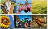 Zmiany, które czekają rolników w 2019 roku. Nowe przepisy - handel, dopłaty, podatki