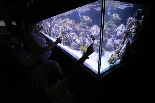 Pierwszymi gośćmi Oceaniki w sobotę byli rodzice z małymi dziećmi. Najmłodsi mieli wielką frajdę, kiedy oglądali różne ryby z odległych mórz i oceanów.