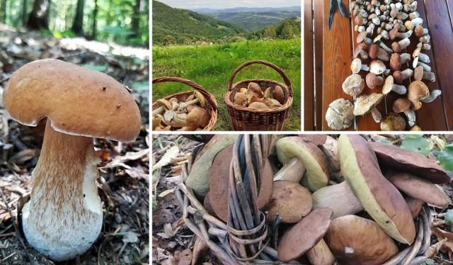 Wysyp grzybów w Małopolsce.Zobacz na kolejnych slajdach zbiory Czytelników - posługuj się myszką, klawiszami strzałek na klawiaturze lub gestami.