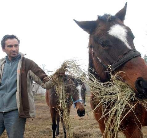 """- Na koniach, które już trafiły pod naszą opieką widać, niestety, """"ślady działalności"""" ludzi - wskazuje Krzysztof Skałecki z """"Centaurusa"""""""
