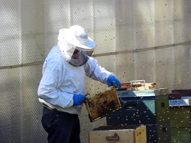 38-latek okradał ule we wsi Lubomyśl. Zabrał 50 sztuk ramek pszczelarskich z zawartością miodu rzepakowego za 3 tysiące złotych.