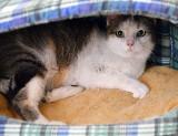 Koty szukają domu. Krecik do adopcji [ZDJĘCIA]