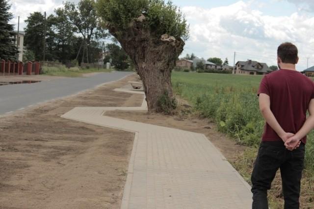 Chodnik w Gołuskach biegnie zygzakiem, żeby chronić chrabąszcza