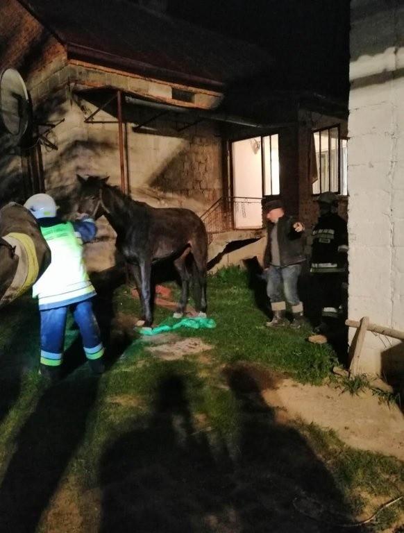 Zgłoszenie o koniu, który wpadł do piwnicy domu w Hłudnie odebrał dyżurny Stanowiska Kierowania Komendanta Powiatowego PSP w Brzozowie. Do niecodziennego zdarzenia zadysponowano zastępy Jednostki Ratowniczo-Gaśniczej KP PSP z Brzozowa i Ochotniczej Straży Pożarnej w Hłudnie.