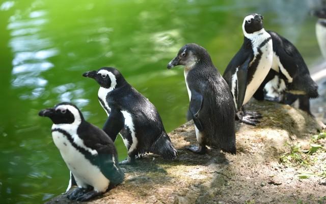 Łódzkie zoo będzie czynne zarówno w sylwestra i w Nowy Rok