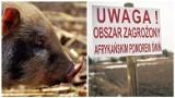 Agro wieści tygodnia. ASF w Lubuskiem, trwa wydłużony nabór na pomoc po suszy