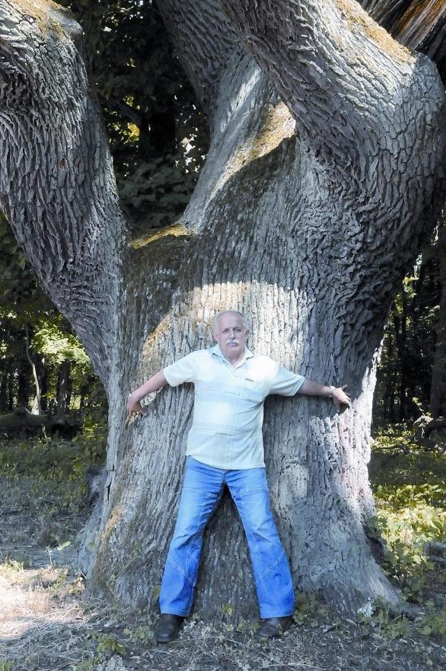 """Potężny dąb Mohort ma """"tylko 270 lat"""" i został nazwany tak po pierwszym polskim leśniczym Janie Pieńkowskim - Mohorcie. Mirosław Czarnecki nie miał szans go objąć."""