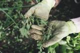 Ile można zarobić u rolnika? Stawki do 5 tys. zł miesięcznie. Do jakiej pracy potrzebna jest pomoc?