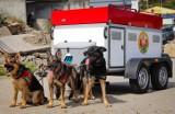 Zbiórka na samochód dla psów z Ochotniczej Straży Pożarnej w Gdańsku. Dzięki niemu psi ratownicy szybciej dotrą na miejsce poszukiwań