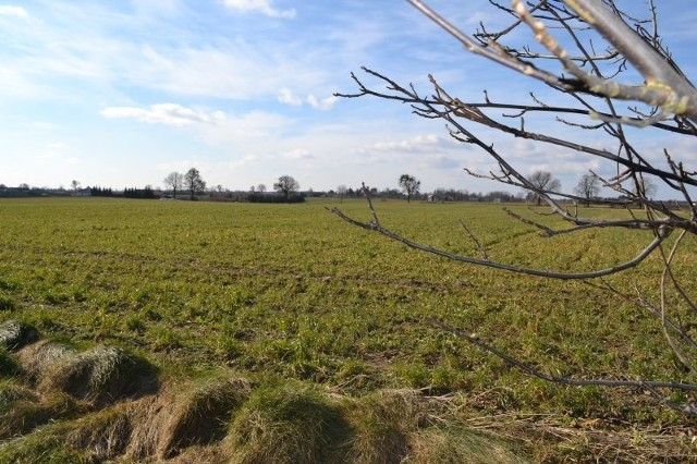 Zainteresowanie dzierżawą gruntów rolnych nie maleje