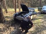Luksusowy austin znaleziony w lesie. Jego wartość może wynosić 260 tys. zł