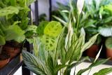5 sposobów na to, aby Twoje rośliny szybko rosły - poradnik tworzenia domowej dżungli od podstaw