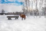Zimą malowane. Zobacz zdjęcia Sokólszczyzny pokrytej białym puchem