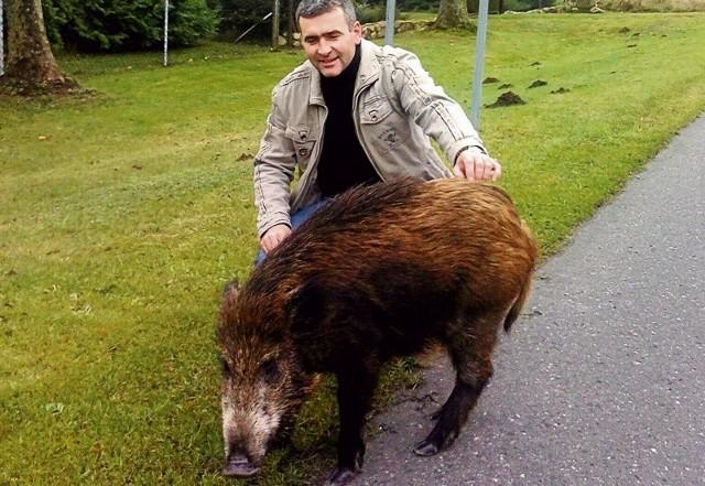 Pan Grzegorz z gminy Dobrzany przysłał nam alarm@gs24.pl sympatyczne zdjęcie z dzikiem.  Zwierzak się zgubił i szukał jedzenia w śmieciach.