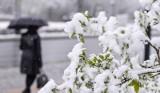 Śnieg pada, idzie mróz. Jaka pogoda w święta? [PROGNOZA IMGW GRUDZIEŃ 2017] Białe Boże Narodzenie?