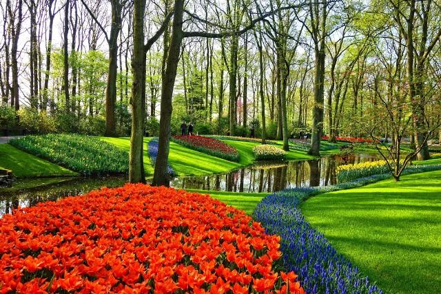 Początek wiosny kalendarzowej i astronomicznej nie zawsze pokrywają się. Ale najbardziej wyczekujemy wiosny przyrodniczej, którą wyznacza rozwój roślin. Zobaczcie, kiedy zaczyna się wiosna.