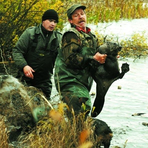 Jedenaście bobrów zmieniło miejsce zamieszkania, ale to – zdaniem rolników – nie załatwia problemu