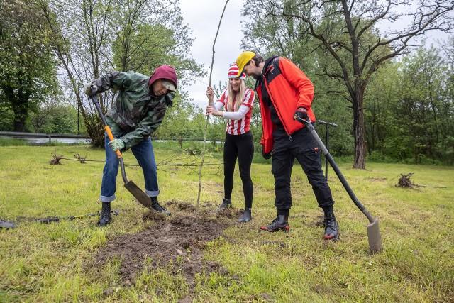 Sadzenie drzew przez kibiców Cracovii