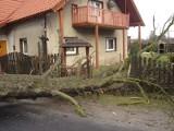 Drzewo przewróciło się koło domu!