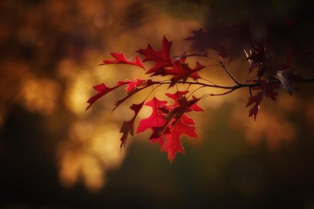 Jaka pogoda czeka nas jesienią i zimą? Prognoza pogody długoterminowej na październik, listopad i grudzień.