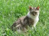Te koty szukają domu. Przygarniesz Puchatka? [ZDJĘCIA]