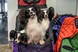 Najpiękniejsze psy drugiego dnia wystawy na MTP [ZDJĘCIA]